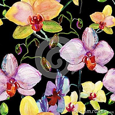 Fiori delle orchidee illustrazione dell 39 acquerello for Magnolia pianta prezzi