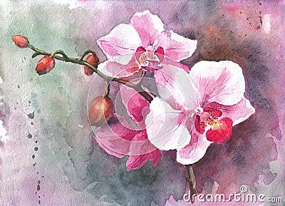 Fiori disegnati a mano dell 39 orchidea dell 39 acquerello for Fiori disegnati