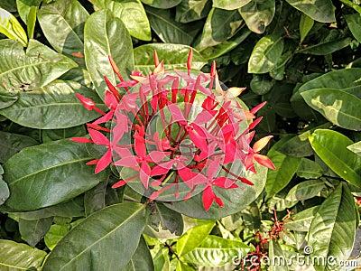 Fiori e foglie verdi rossi fotografia stock immagine for Fiori verdi