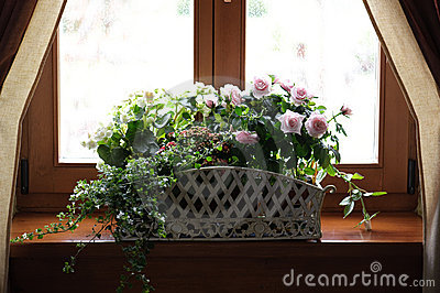 Fiori sul davanzale della finestra fotografie stock libere da diritti immagine 9947798 - Fiori da finestra ...