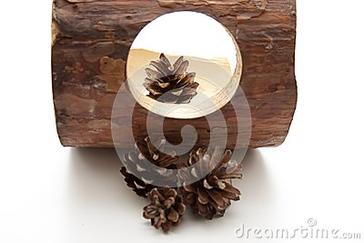 Fir cone with wood