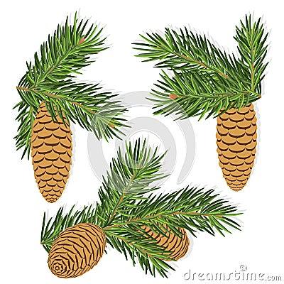 Fir pine cones