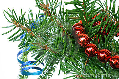 Fir tree branch with cristmas decoration