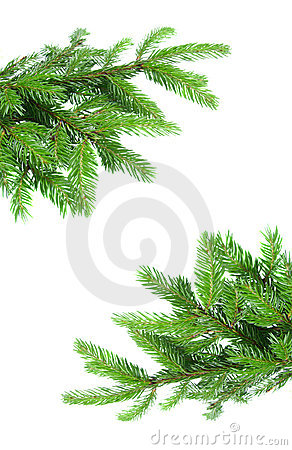 Free Fir Tree Branch Frame Stock Image - 20460901