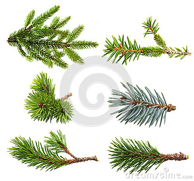 Free Fir Tree Branch Set Royalty Free Stock Photos - 44831318