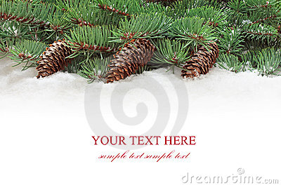 Fir tree branches with cones.