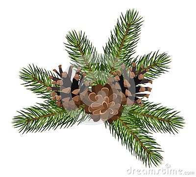 Fir tree branches and cones. Vector illustration.
