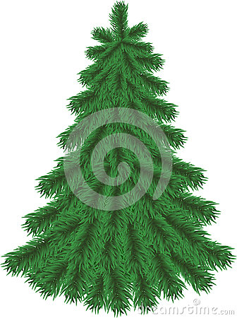 Fir tree without Christmas decorations