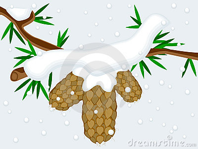 Fir tree cones