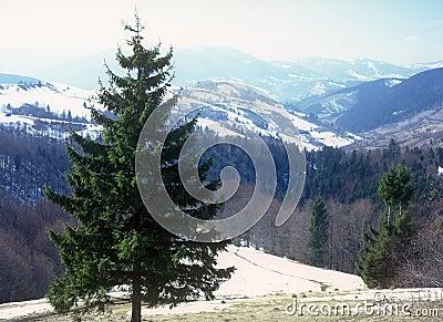 Carpathian landscape.