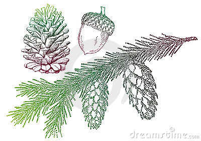 Fir tree, vector