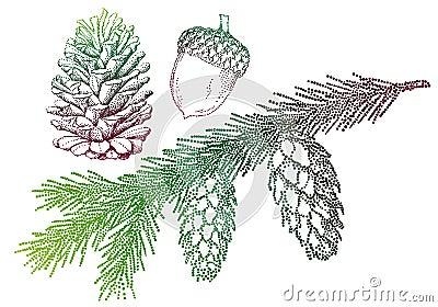 Fir tree, vector