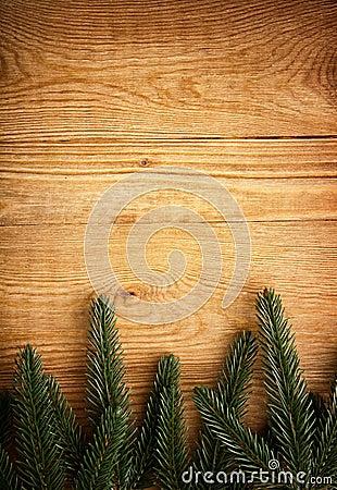 Fir tree on wood