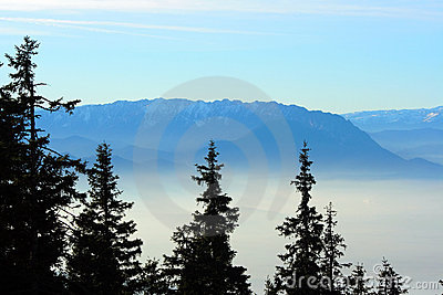Fir trees over a foggy valley