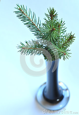 Fir in the vase