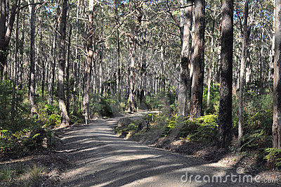 A fire access road makes its way through a forest