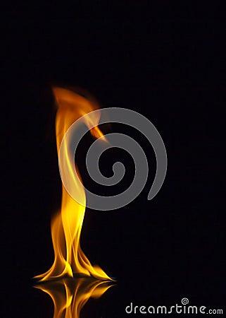 Fire Animal