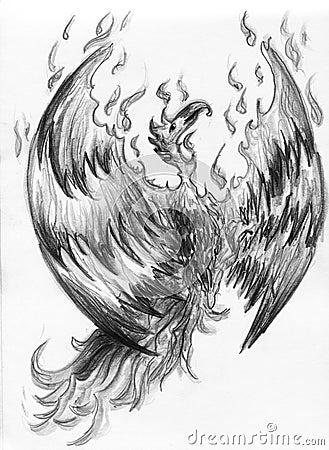 Fire bird - phoenix