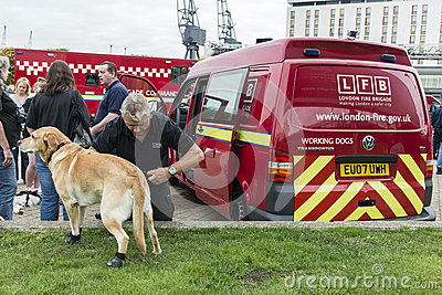 A fire brigade dog isprepared for action Editorial Image