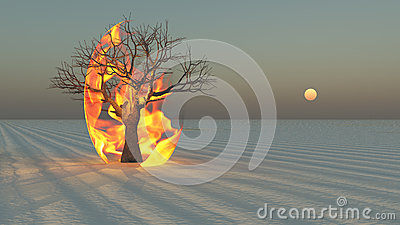 Fire burning around tree in desert