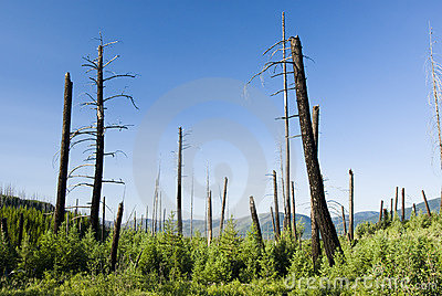 Fire damage & new growth