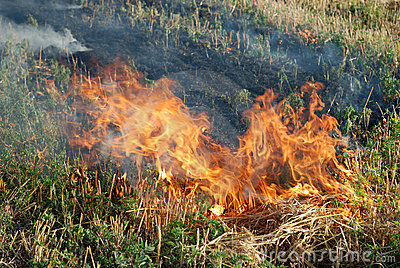 Fire in the dry grass field