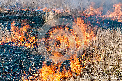 Fire in dry grass