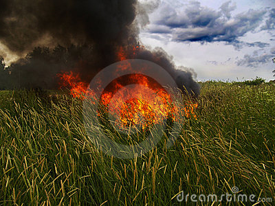 Fire in grass