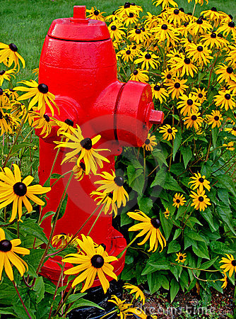 Free Fire Hydrant And Flowers Royalty Free Stock Photo - 5545135