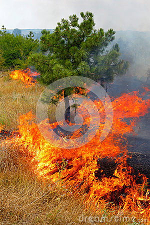 Free Fire In The Woods On A Hot Summer Day. Drought. Royalty Free Stock Photography - 26047077