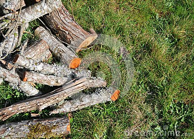 Fire wood on grass