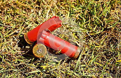 Fired shells empty red shot gun  bullet cartridges