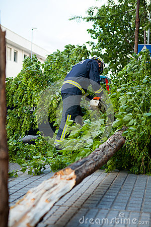 Fireman working in a broken tree after a wind storm.