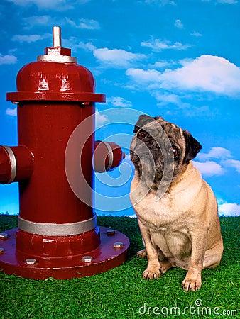 Fireplug Pug