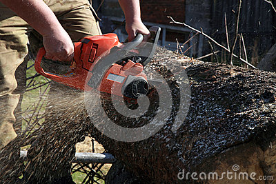 Firewood cut