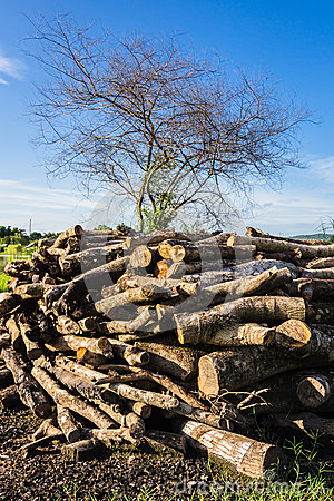 Make a firewood shed uk