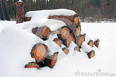 Firewood store under snow