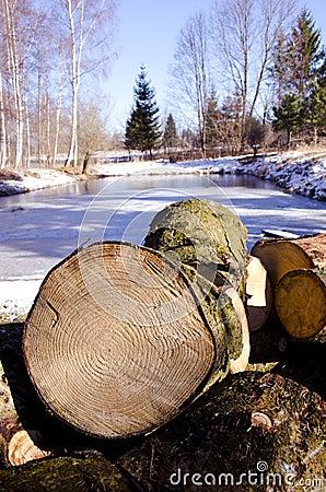 Firewood in the winter farm