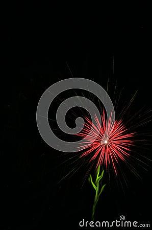 Fireworks - Red Flower