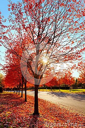 Firey fall colors