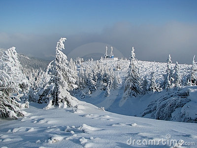 Firry timberline in the winter.