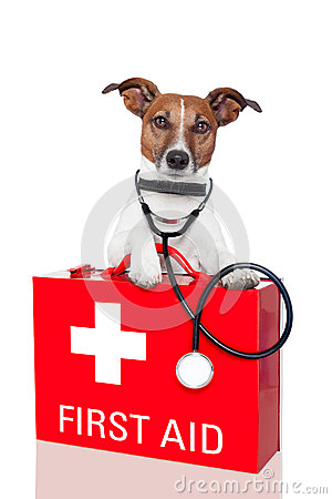 Free First Aid Dog Royalty Free Stock Photos - 25468938