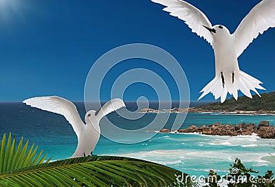 First flight. Birds, islands of Seychelles.