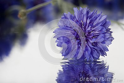 First Fresh Spring Flower Royalty Free Stock Photo - Image: 23630595