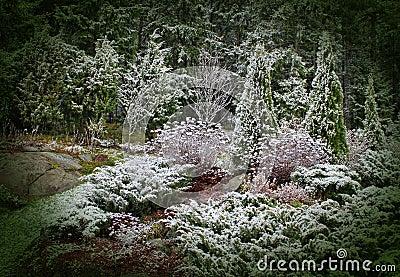 First snow in mystic garden