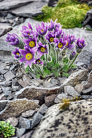 Free First Spring Flowers Stock Image - 17164341