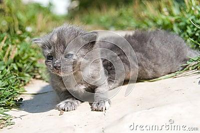First walk of small kittens