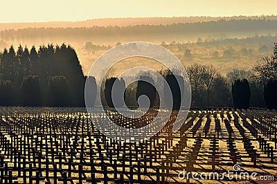 First world war military cemetery