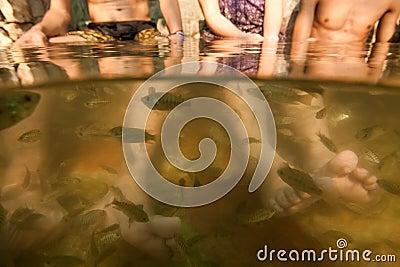 Fischbadekurortfüße Pedicure-Hautpflegebehandlung