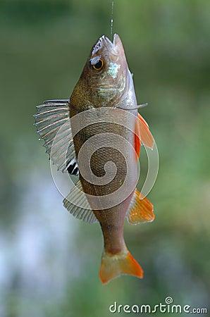 Fische auf Zeile
